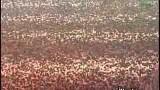 Hajj (Arafat) orignal Labiak